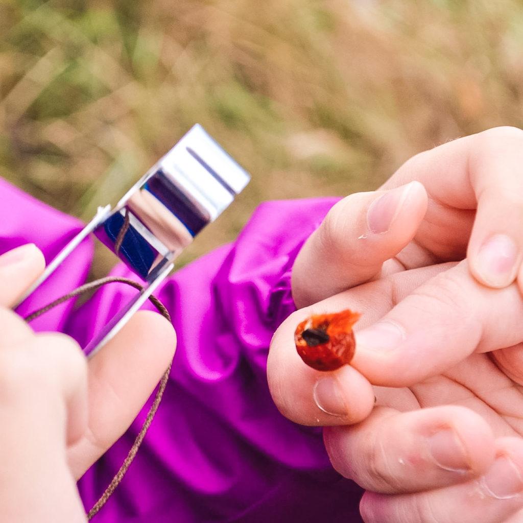 Anna organise aussi des balades botaniques pour découvrir la faune et la flore