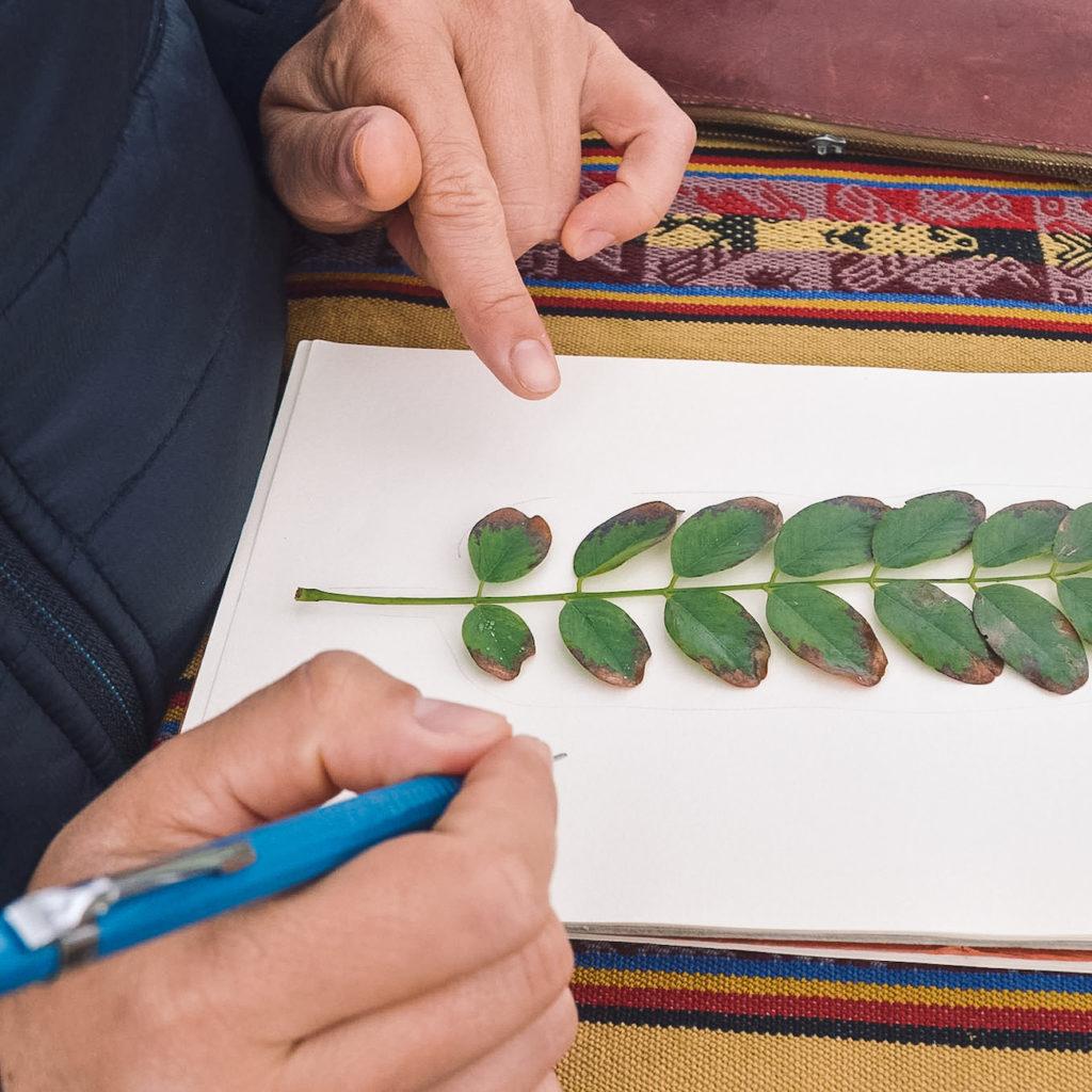 Lors de balades botaniques, Anna de l'Atelier du Vert d'eau propose aussi des sessions DIY de dessin