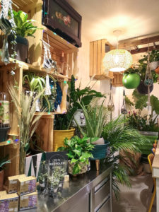 Capsule végétale, la boutique atelier parfaite pour trouver sa plante verte.