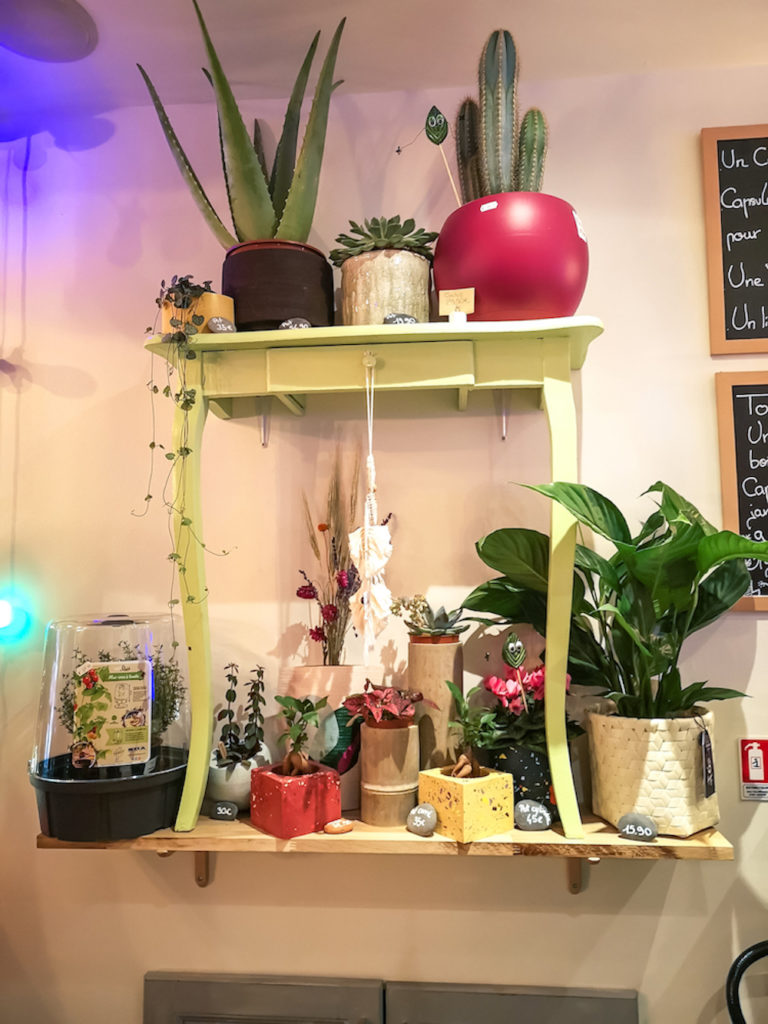 Chez Capsule végétale, le soin est apporté aux plantes et à la déco.
