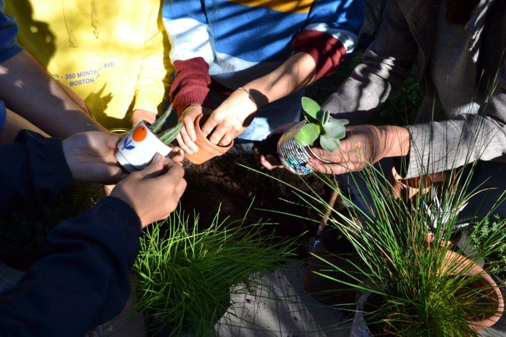 Le résultat d'un atelier rempotage dans un contenant recyclé avec le collectif Sous les pavés la plante à Toulouse