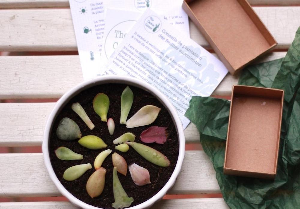 Les kits de jardinage de Cactus corner