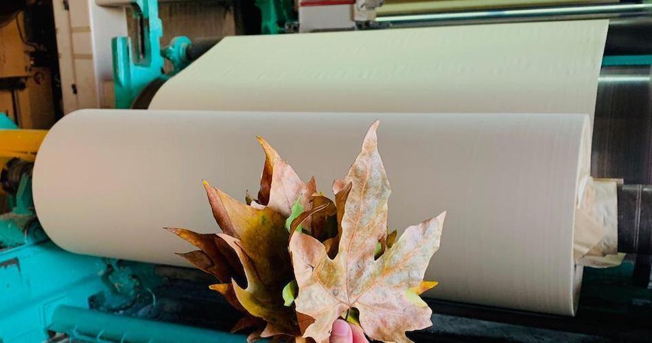 RE-leaf PAPER recycle les feuilles d'arbres tombées au sol.